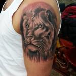 aslan-dovmeleri